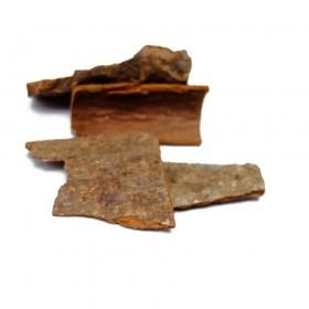GUI PI - Cortex Cinnamomi