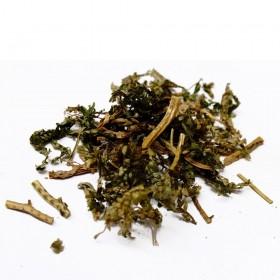 SHI SHANG BAI/DI BAI ZHI - Herba Selaginelliae