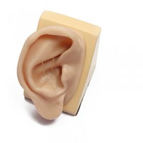 Modelo de oreja en silicona para acupuntura