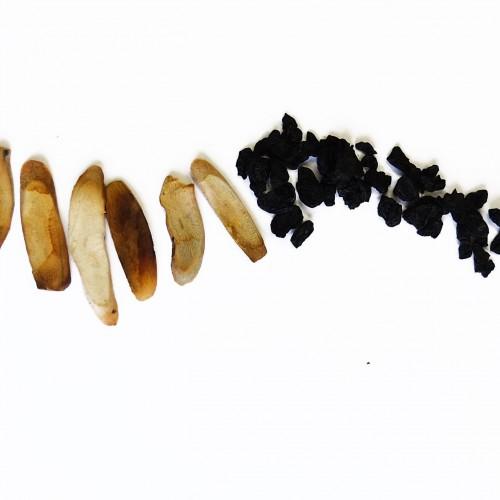 BAI JU HUA (CHAO JIAO)-Flos Chrysanthemi Morifolii