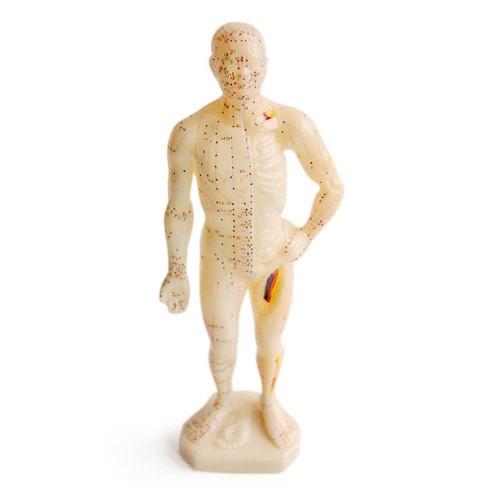 Model cos humà home