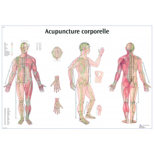 Planches des points d'acupuncture (Français)