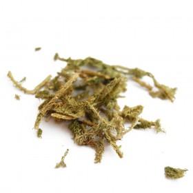 SHEN JIN CAO - Herba Lycopodium