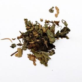 JING JIE - Herba Schizonepetae