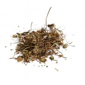 JI XUE CAO - Centela Asiatica - Herba Centellae