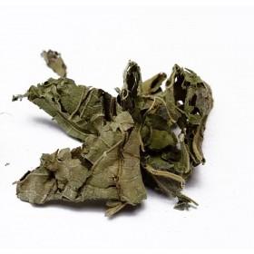 MU FU RONG YE - Folium Hibiscus Mutabilis