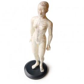 Model cos humà dona