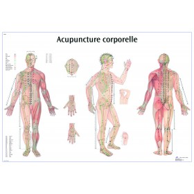 Planches des points d'acupuncture (Français) - 50%